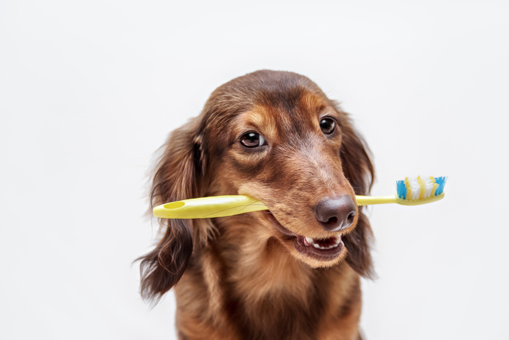 dog holding a toothbrush in his mouth